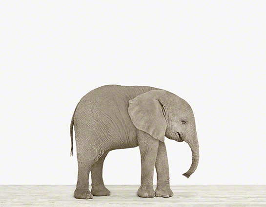 the animal print shop: elephant